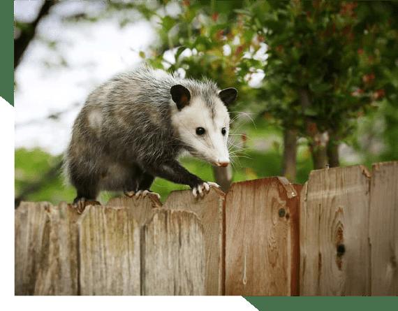 Best Possum Removal Adelaide